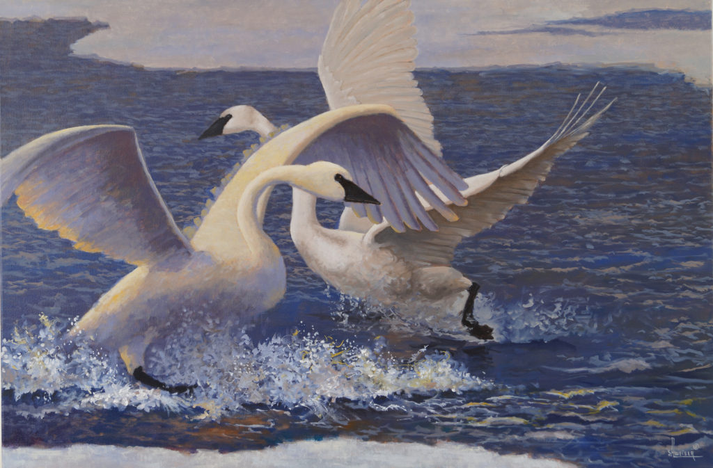 Winter Play, oil on canvas by Sharon Weiser depicts two swans taking flight from a partially frozen river.