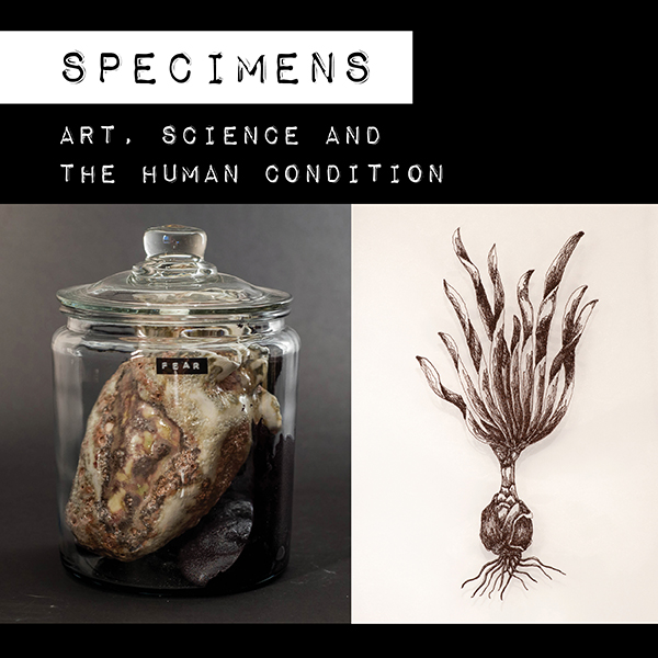 """Specimens"" Gallery Exhibition at ArtReach St. Croix"